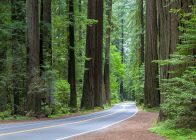 Avenue of the Giants in Northern California