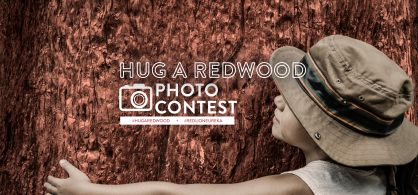 Hug A Redwood Tree Photo Contest